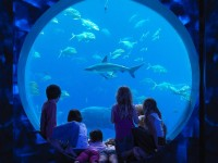 Atlantis_Waterpark_Aquaventure_and_Lost_Chamber_Combo_skylink_travel_oran_algerie1.jpg