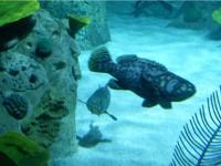 Aquarium_d_Istanbul_et_visite_shopping_skylink_travel_oran_algerie_1.jpg
