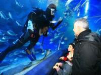 Aquarium_d_Istanbul_et_visite_shopping_skylink_travel_oran_algerie_2.jpg