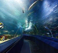 Aquarium d'Istanbul et visite shopping - Petits groupes