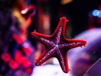 Florya_Aquarium_Parc_d_attraction_skylink_travel_oran_algerie_1.jpg
