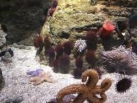 Florya_Aquarium_Parc_d_attraction_skylink_travel_oran_algerie_2.jpg